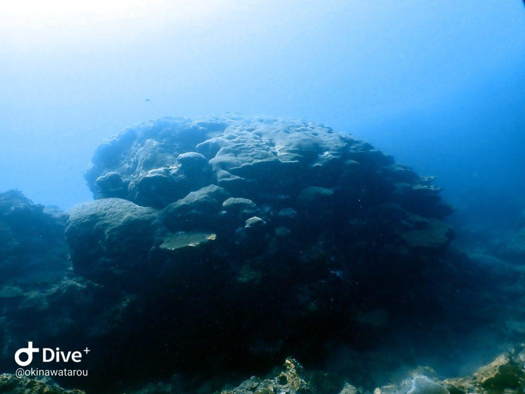 U.F.O岩(ハマサンゴ)