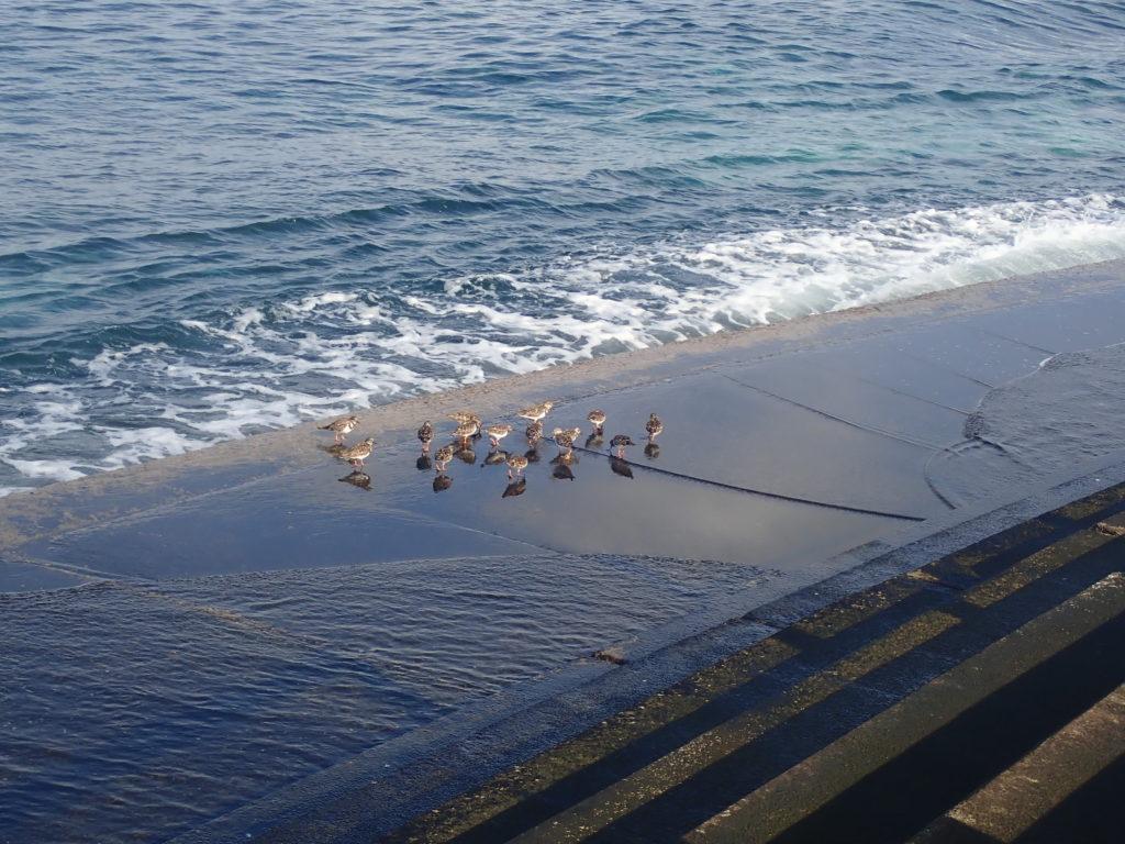 かわいい鳥の群れ